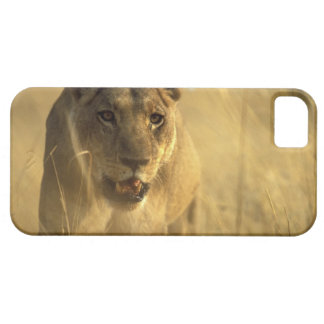 Africa, Botswana, Moremi Game Reserve, Lioness iPhone 5 Covers