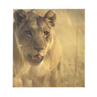 Africa, Botswana, Moremi Game Reserve, Lioness Notepad