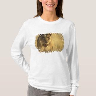 Africa, Botswana, Moremi Game Reserve, Lioness T-Shirt