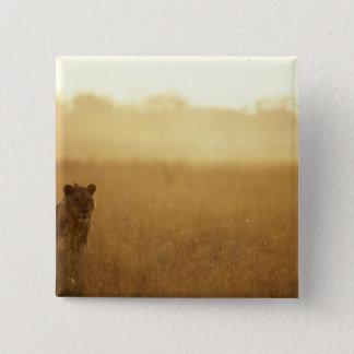 Africa, Botswana, Moremi Game Reserve, Male Lion 15 Cm Square Badge
