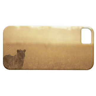 Africa, Botswana, Moremi Game Reserve, Male Lion iPhone 5 Covers