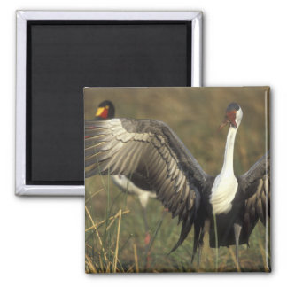Africa. Botswana, Moremi Game Reserve, Wattled Refrigerator Magnets