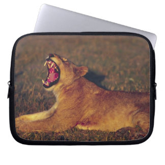 Africa,Botswana,Moremi Wildlife Reserve. Lioness Computer Sleeve