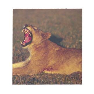Africa,Botswana,Moremi Wildlife Reserve. Lioness Notepad