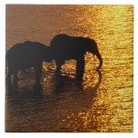 Africa, Botswana, Okavango Delta. African