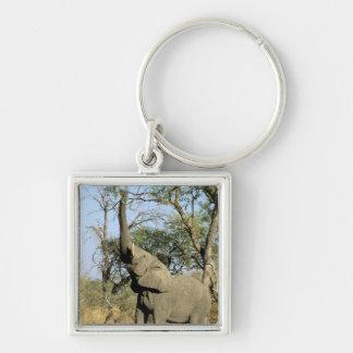 Africa, Botswana, Okavango Delta. African 2 Key Ring