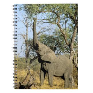 Africa, Botswana, Okavango Delta. African 2 Notebook
