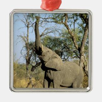 Africa, Botswana, Okavango Delta. African 2 Silver-Colored Square Decoration