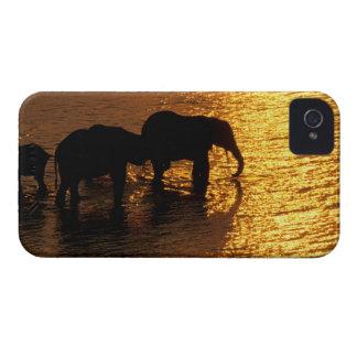 Africa, Botswana, Okavango Delta. African iPhone 4 Case