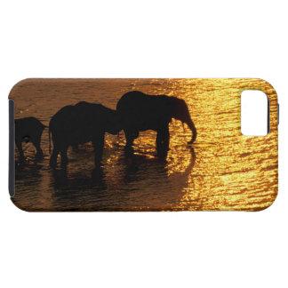 Africa, Botswana, Okavango Delta. African iPhone 5 Case