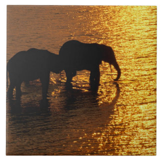 Africa, Botswana, Okavango Delta. African Tile