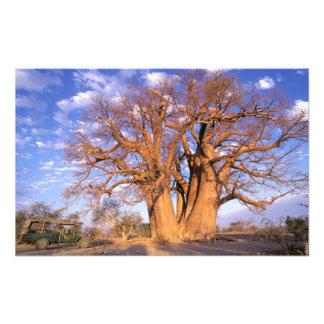 Africa, Botswana, Okavango Delta. Baobab Art Photo