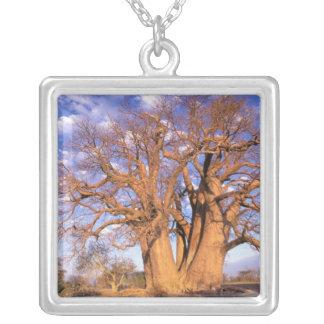 Africa, Botswana, Okavango Delta. Baobab Silver Plated Necklace