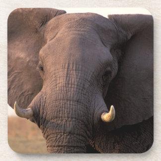 Africa, Botswana, Okavango Delta. Elephant Coaster