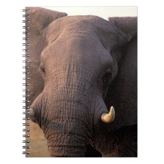 Africa, Botswana, Okavango Delta. Elephant Notebooks