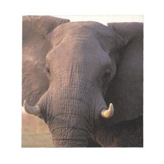 Africa, Botswana, Okavango Delta. Elephant Notepad