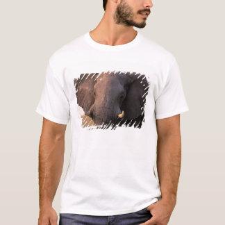 Africa, Botswana, Okavango Delta. Elephant T-Shirt