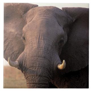 Africa, Botswana, Okavango Delta. Elephant Tile