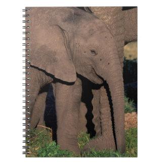 Africa, Botswana, Okavango Delta. Elephants Notebooks
