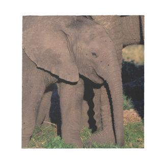 Africa, Botswana, Okavango Delta. Elephants Notepad