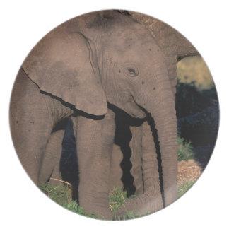 Africa, Botswana, Okavango Delta. Elephants Plate