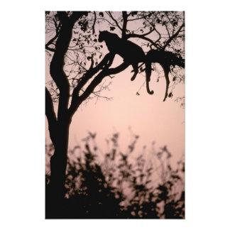 Africa, Botswana, Okavango Delta. Leopard Art Photo