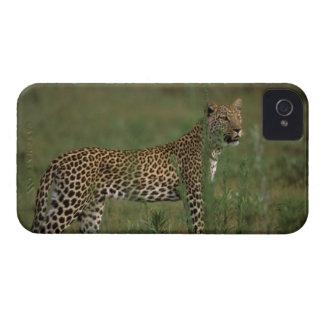 Africa, Botswana, Okavango Delta. Leopard iPhone 4 Case