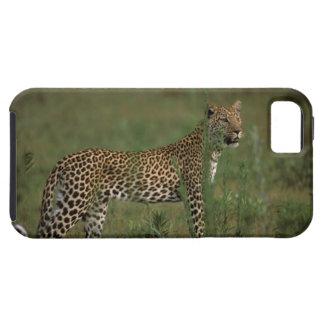 Africa, Botswana, Okavango Delta. Leopard iPhone 5 Case