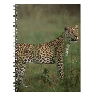 Africa, Botswana, Okavango Delta. Leopard Notebooks