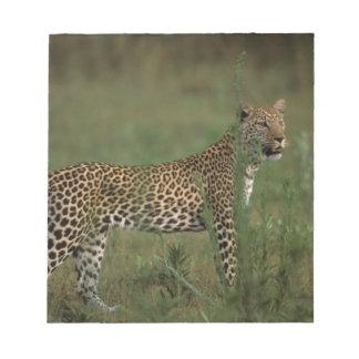 Africa, Botswana, Okavango Delta. Leopard Notepad