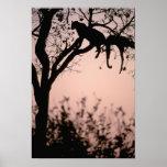 Africa, Botswana, Okavango Delta. Leopard Posters