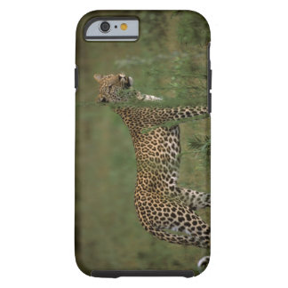 Africa, Botswana, Okavango Delta. Leopard Tough iPhone 6 Case