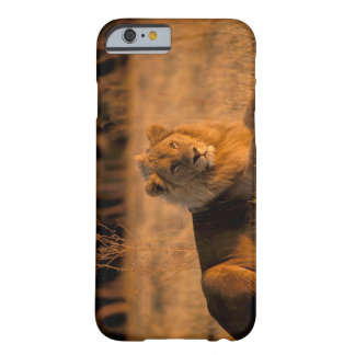 Africa, Botswana, Okavango Delta. Lion (Panthera Barely There iPhone 6 Case