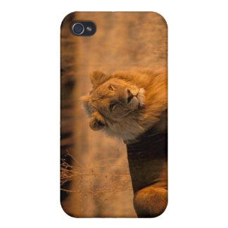 Africa, Botswana, Okavango Delta. Lion (Panthera Case For The iPhone 4