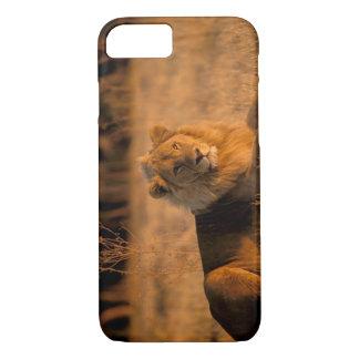 Africa, Botswana, Okavango Delta. Lion (Panthera iPhone 7 Case