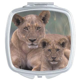 Africa, Botswana, Okavango Delta. Lions Compact Mirror