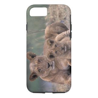 Africa, Botswana, Okavango Delta. Lions iPhone 8/7 Case