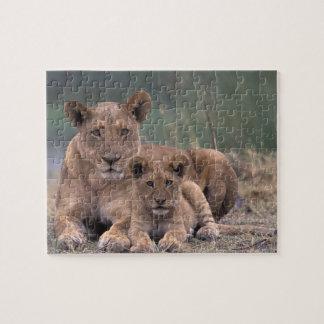 Africa, Botswana, Okavango Delta. Lions Jigsaw Puzzle
