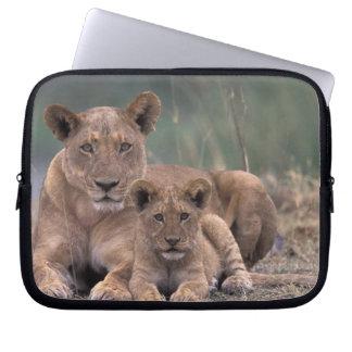 Africa, Botswana, Okavango Delta. Lions Laptop Sleeve
