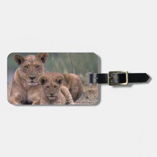 Africa, Botswana, Okavango Delta. Lions Luggage Tag