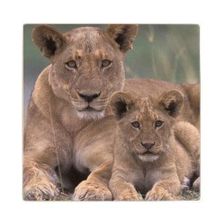 Africa, Botswana, Okavango Delta. Lions Wood Coaster