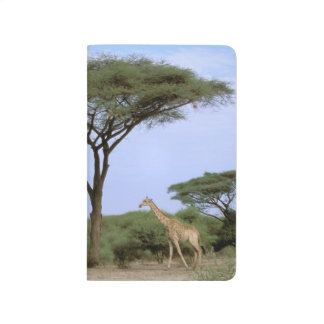 Africa, Botswana, Okavango Delta. Southern Journal