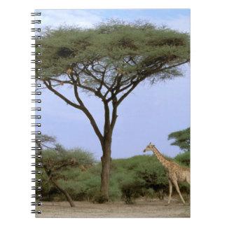Africa, Botswana, Okavango Delta. Southern Notebooks