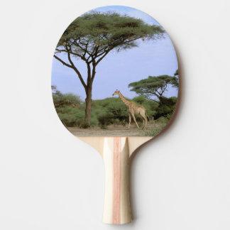 Africa, Botswana, Okavango Delta. Southern Ping Pong Paddle