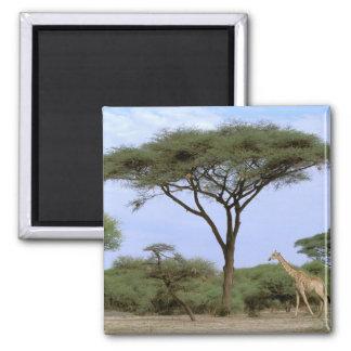 Africa, Botswana, Okavango Delta. Southern Square Magnet