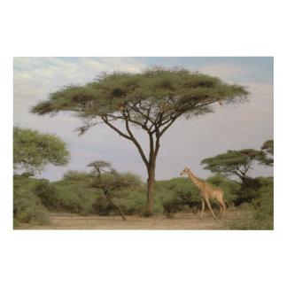 Africa, Botswana, Okavango Delta. Southern Wood Prints