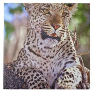 Africa, Botswana, Okvango Delta, wild leopard. 2 Tile