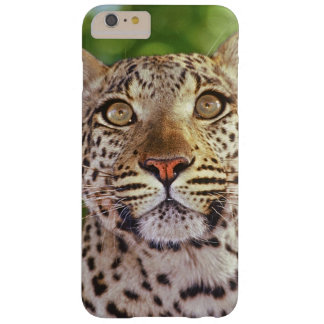 Africa, Botswana, Okvango Delta, wild leopard. Barely There iPhone 6 Plus Case
