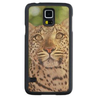 Africa, Botswana, Okvango Delta, wild leopard. Carved Maple Galaxy S5 Case