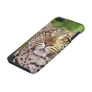 Africa, Botswana, Okvango Delta, wild leopard. iPod Touch (5th Generation) Cases